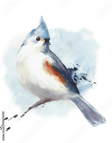 Photo  Tufted titmouse small bird sitting on the branch watercolor painting illustratio