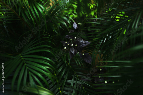 dark exotic fantastic portrait of green palm leaves plants and flower in Thailand. concept of travel, phone or laptop wallpaper background