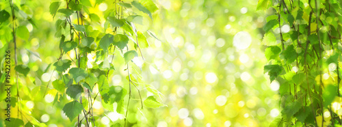 Poster Printemps Green birch leaves branches, green, bokeh background. Nature spring background.