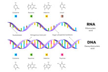 Molecular Structure Of DNA And...