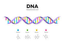 Molecular Structure Of DNA. In...