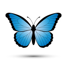 Blue Butterfly Isolated On A W...