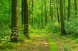 canvas print picture - Wanderweg durch sonnigen grünen Wald im Sommer