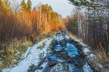 Impassable Forest Road