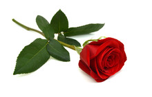 Single Beautiful Red Rose Isol...