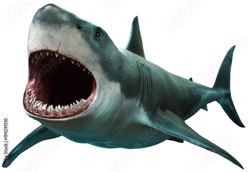 Great white shark Wallpaper Mural