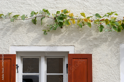 Weinrebe In Spalier An Haus Fassade Im Herbst Buy This Stock Photo