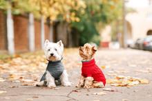 Portrait Of Two Dogs Friends W...