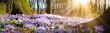 Leinwandbild Motiv Wiese mit zarten Blumen im Frühling