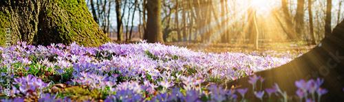Łąka z delikatnymi kwiatami na wiosnę