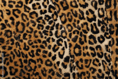 Photographie  détail texture tissu léopard
