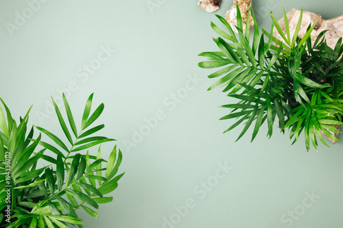 Poster Vegetal Tropical leaves and plants on a green background with space for text. Top view, flat lay.