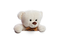 Teddy Bear With White Blank Space For Commercial Graphycs