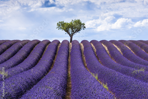 Spoed Foto op Canvas Mediterraans Europa Lavender fields, Provence, France