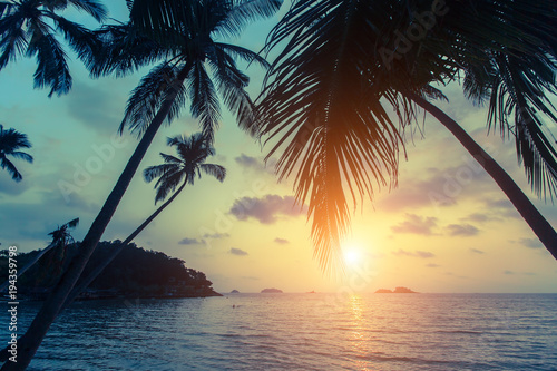 Tropical sea beach during sunset, with silhouettes of palm leaves.