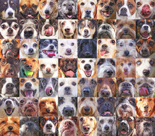 56 Dog Heads In A Poster Showi...