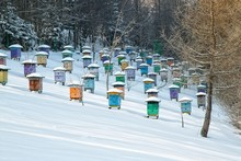 Beehives In Snow.