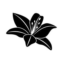 Flower Lily Delicate Decoratio...