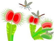 Venus Flytrap Or Dionaea Musci...