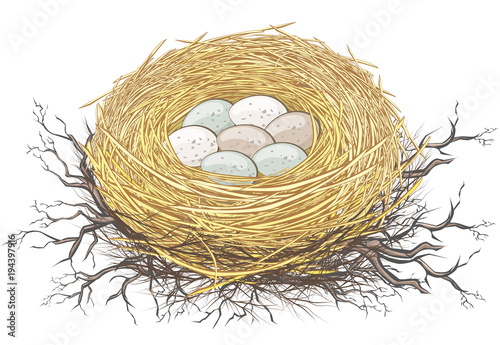 Fotografia, Obraz  Nest oder Gelege eines Vogels mit Eiern in der Natur Ostern Dekoration