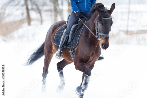 Fotografía  Bay horse with female rider galloping on winter field