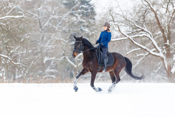 Young rider girl on bay horse walking on snowy field in winter. Winter equestrian activity background