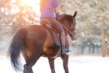 Bay horse with female rider trotting on winter field. Equestrian concept image with copy space