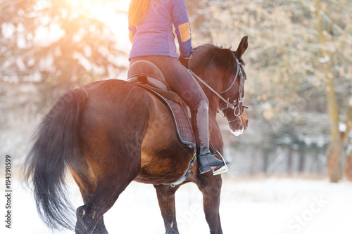 Foto Bay horse with female rider trotting on winter field