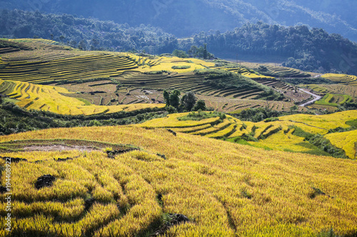 Deurstickers Honing Terraced rice fields in the North mountains of Vietnam. Lao Cai province.