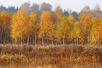 Fototapeta Wiejski Grassy and wooded meadows of Masovia region in central Poland in autumn season