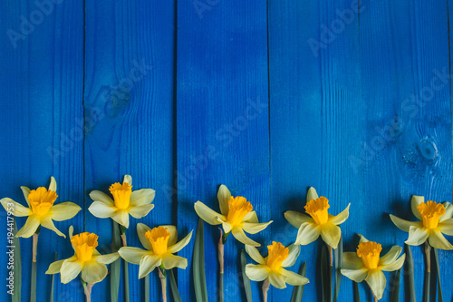 Foto op Plexiglas Narcis Yellow flowers daffodils on blue wooden table. Beautiful Colorful Greeting Card for Mothers Day, Birthday, March 8. Top view,