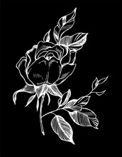 Black White Rose Illustration. Drawing Of A Plant In The Style Of A Tattoo. Chalk On A Blackboard.