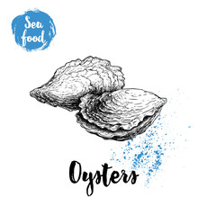 Hand Drawn Oysters Composition. Seafood Sketch Style Illustration. Fresh Marine Mollusks In Closed Shells.