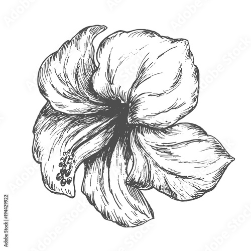 Tropical Hibiscus Flower Black Hand Drawn Monochrome Etching