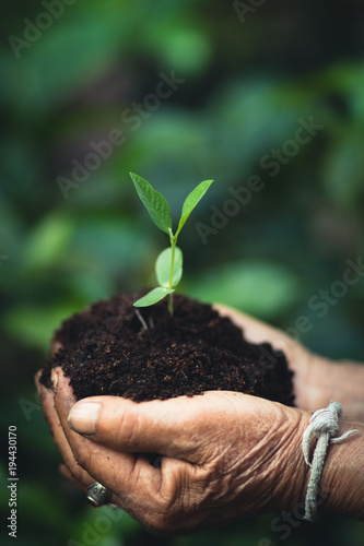 Foto op Aluminium Lente Plant a tree The soil and seedlings in the grandmother's hand