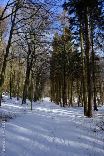 Tuinposter Weg in bos schneewald