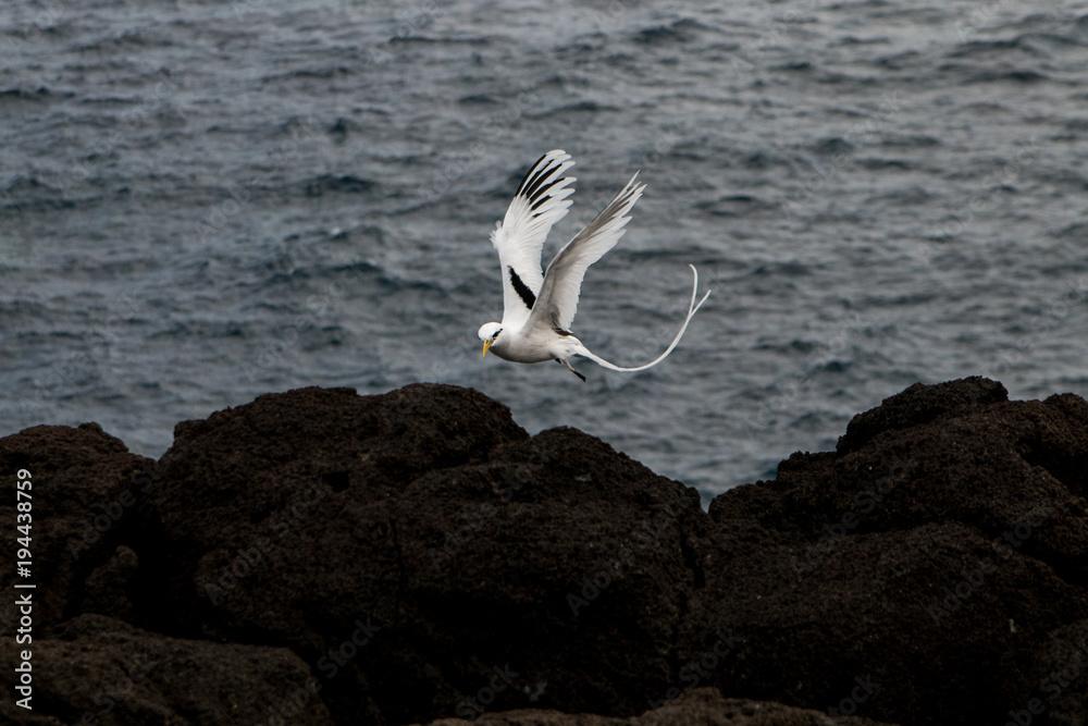 Oiseau en vol entre terre et mer - paille en queue