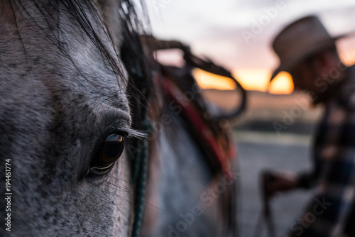 Fototapeta Cowboy saddling horse obraz