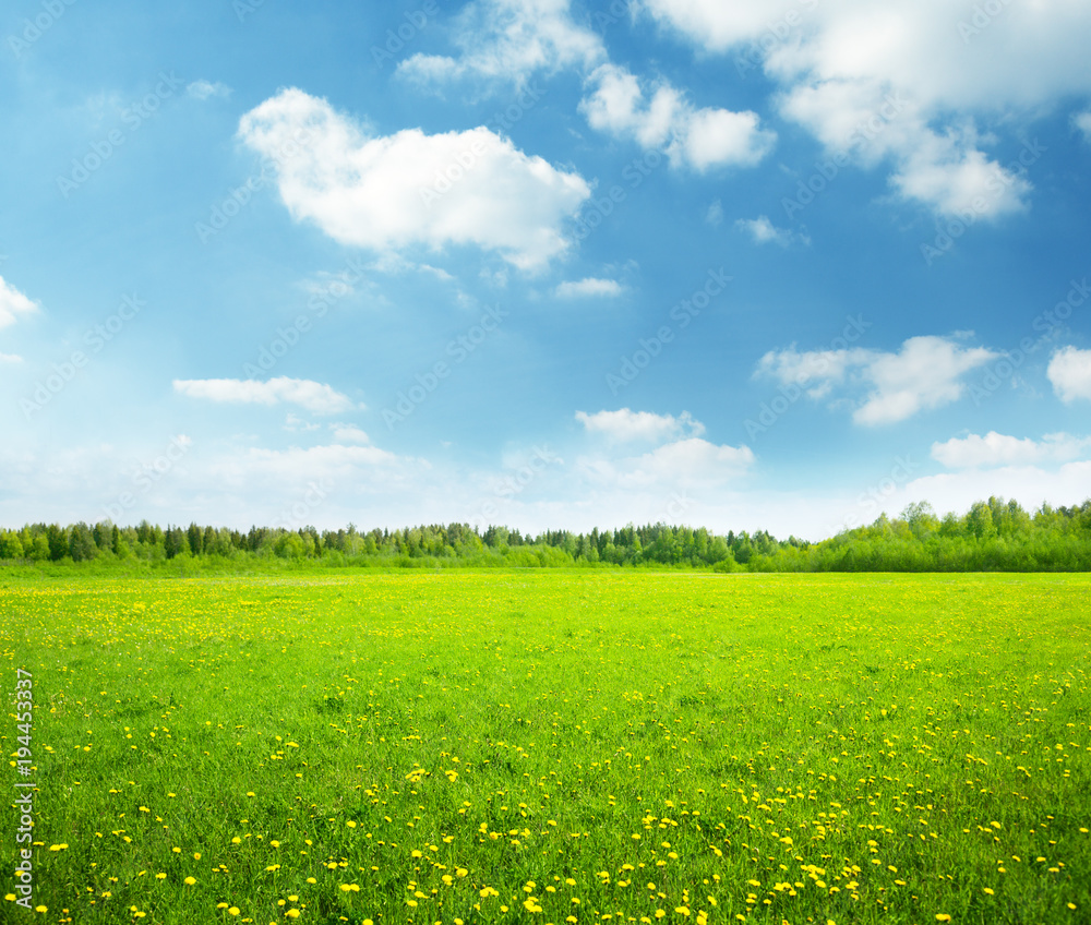 Fototapety, obrazy: field of spring flowers and perfect sky