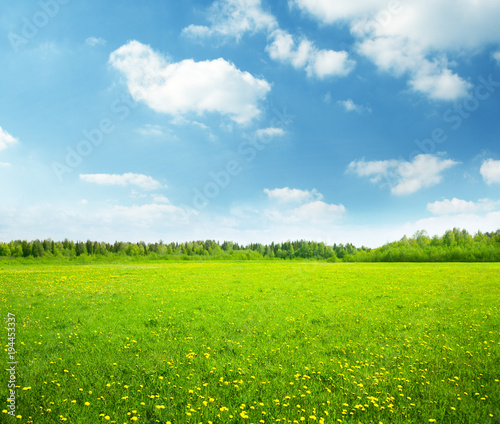 Photo Stands Lime green field of spring flowers and perfect sky