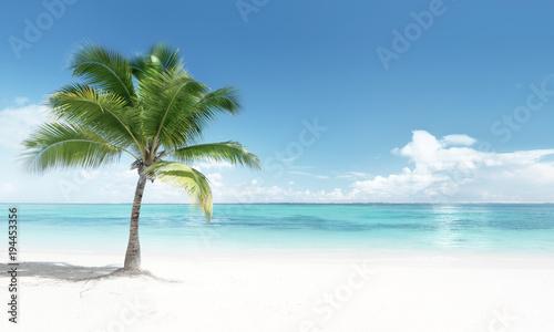 Fotobehang - palm on the beach