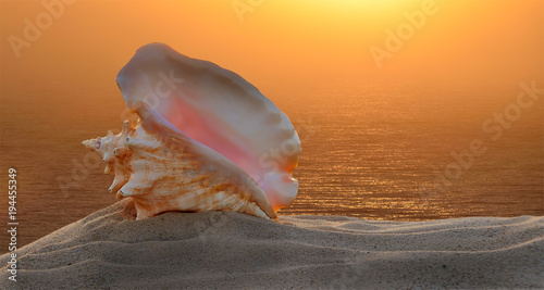 Large sea shell on sand, on a background of the rising sun and the sea.