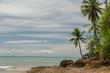 Mar verde e seus coqueiros
