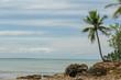coqueiros e o mar
