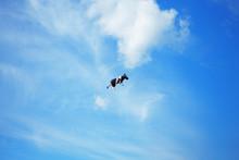 Black White Cow In The Sky