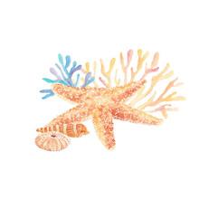 Watercolor Illustration Of Sea...