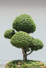 Bonsai Tree Isolated On White ...
