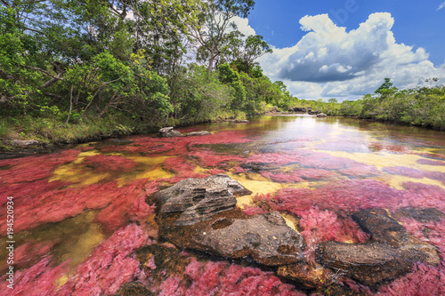 Poster Zuid-Amerika land Cano Cristales (River of five colors), La Macarena, Meta, Colombia