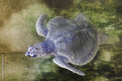 Injured sea turtle in a sanctuary