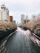 cherry blossoms floating down river panoramic view of japanese buildings in downtown city tokyo urban sprawl for miles